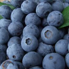 brueberry.jpg